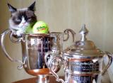 Пока собаки гоняются за мячами, коты выигрывают «Шлемы». Роль котиков в современном теннисе