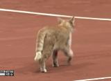 Дельбонис ударил мячом выбежавшую на корт кошку в Стамбуле