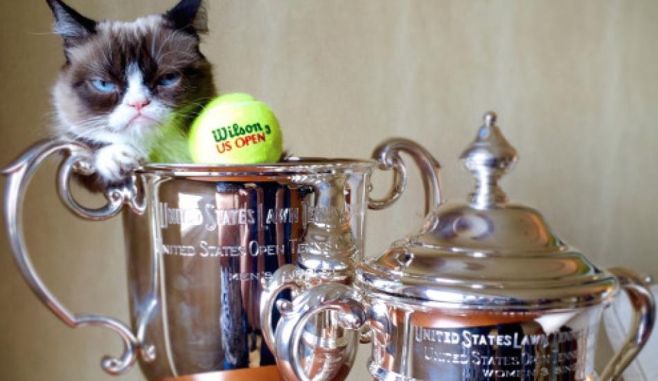 """Пока собаки гоняются за мячами, коты выигрывают """"Шлемы"""". Роль котиков в современном теннисе"""