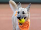 В Сан-Паулу прошел выставочный матч, на котором болбоями выступили собаки из приюта