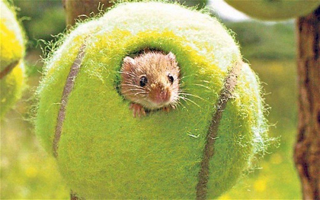 Домик для полевых мышей